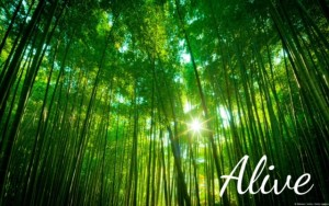 Bamboo forest alive